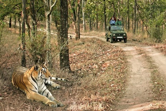 Tiger in Pench national park - Travel and Tour Package Itinerary