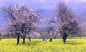 Image 3 for Why Kashmir? - Kashmir Tour Packages