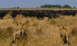 Image 1 for Why Botswana - Botswana Tour Packages