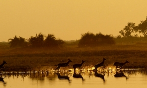 Image 2 for Why Botswana - Botswana Tour Packages