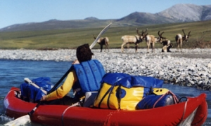 Image 2 for Why Alaska - USA - Alaska Tour Packages
