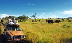 Image 3 for Why Zambia  - Zambia Tour Packages