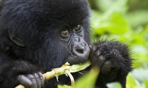Image 1 for Rwanda - Introduction - Rwanda Tour Packages